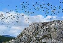 Birds of Monte Barbarossa