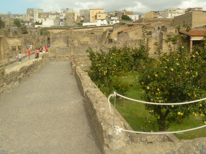 Lemon Orchards in the midst of  ruins
