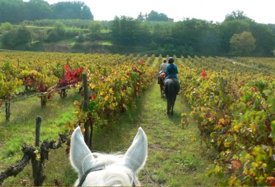 Discover-Tuscany_7-548x373