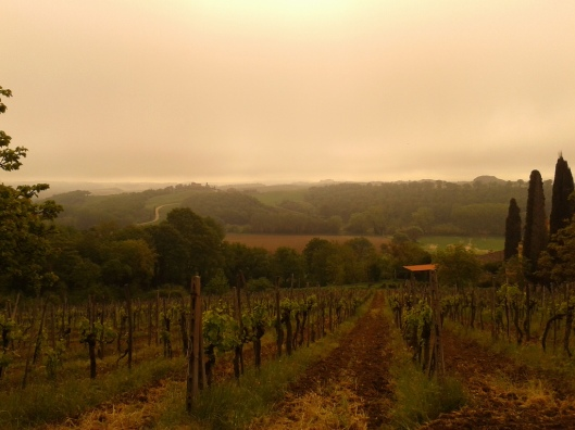 Morning in Chianti
