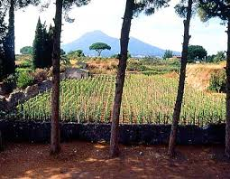 Pompeii Vineyard