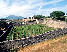 Pompeii Vineyard Today