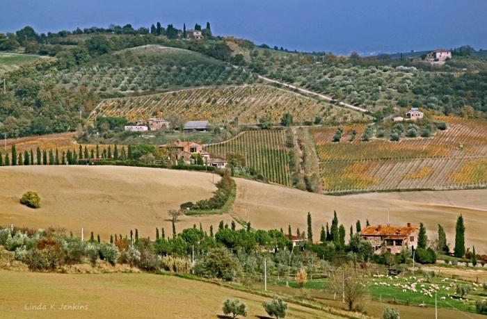Vineyards outside Montepulciano