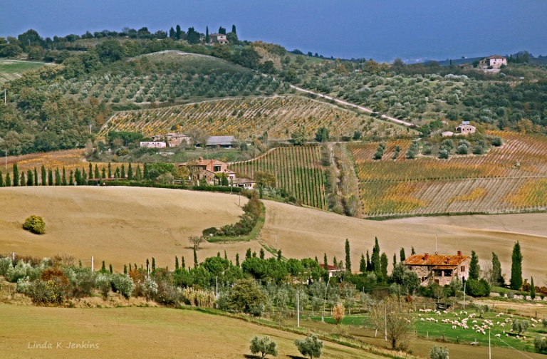 Vineyards outside Montepulciano