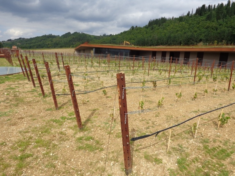 Newly planted vineyards surrounding the Cantina