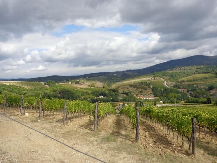 Vineyard stretch to the horizon
