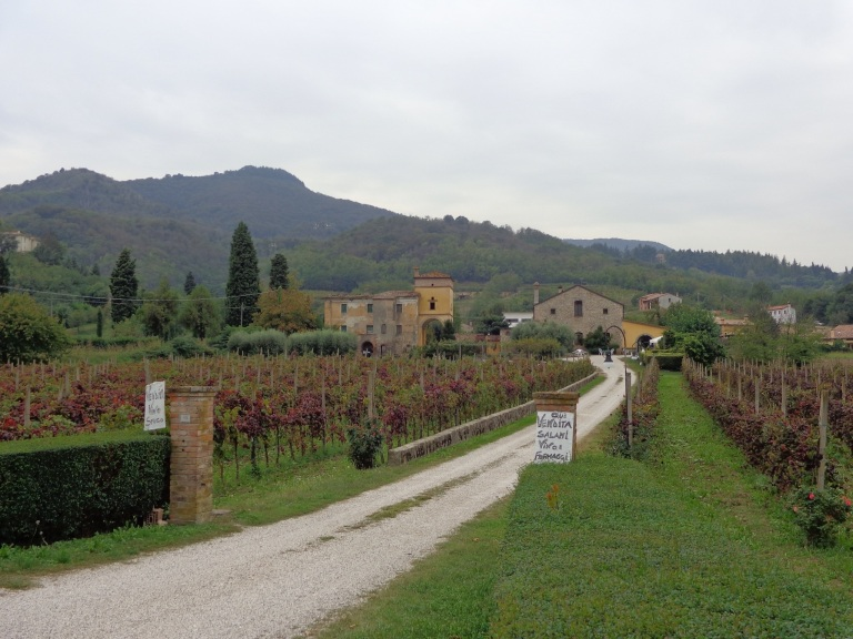 Vineyards and villa of the Euganean Hills