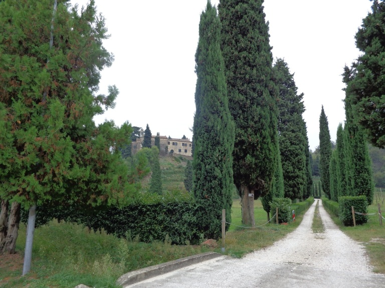 Cypress trees line the roads adding an old stately effect