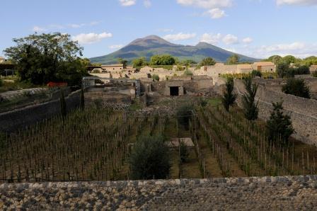 Pompeii Vineyard and Mt. Vesuvius