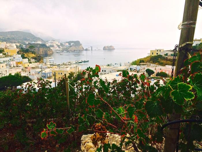 Vineyards on Ponza
