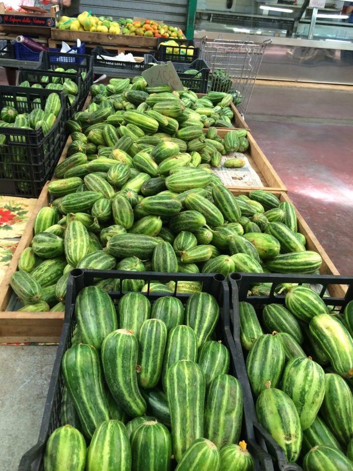 Rows of striped cucumbers