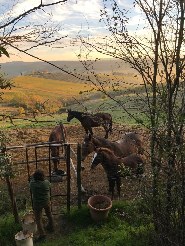Il Poderaccio A Tuscan Agriturismo With View Timeless Italy Travels Scroll Saw Wilderness While We Were There Couple Of Young Horses That Born The Previous Spring At Their Mothers Sides